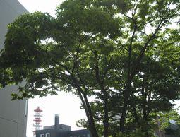 初夏の木立 (1)