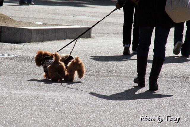 散歩する人