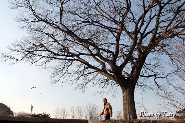 散歩する老人