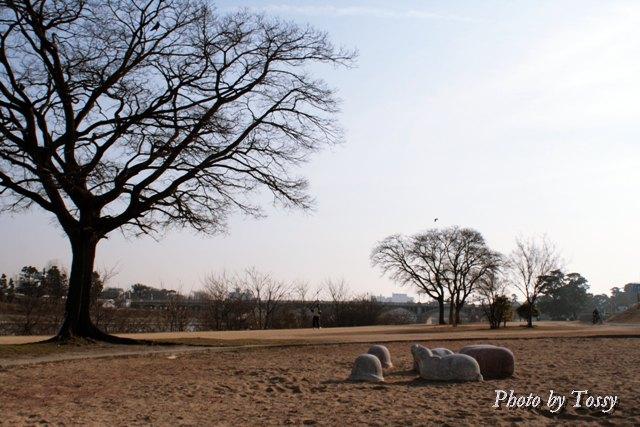 大きな木と砂場の動物達