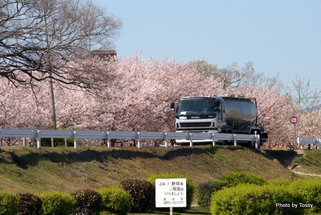 桜の下を行くトラック