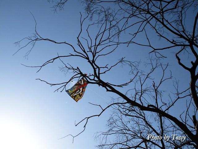 枝にひっかっかったタコ