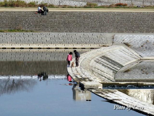 武庫川 洗い堰の子供