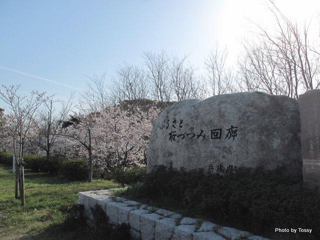 桜づつみ回廊
