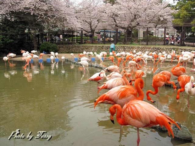フラミンゴ池
