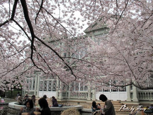 桜の中のハンター邸