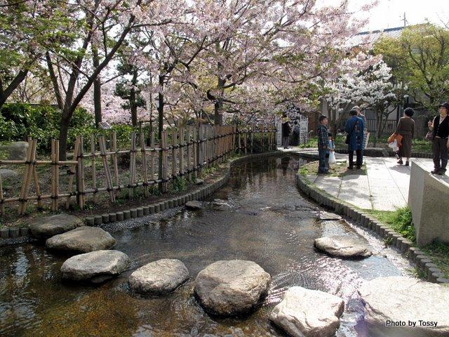 桜守公園3