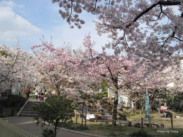 桜守公園1