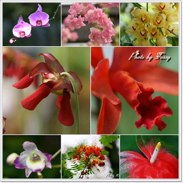 温室の花 コラージュ1
