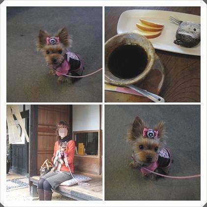 1cats_20110303103418.jpg