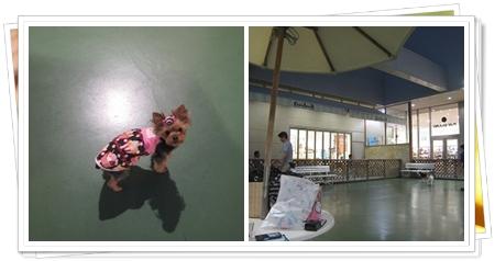 1cats_20110516114212.jpg