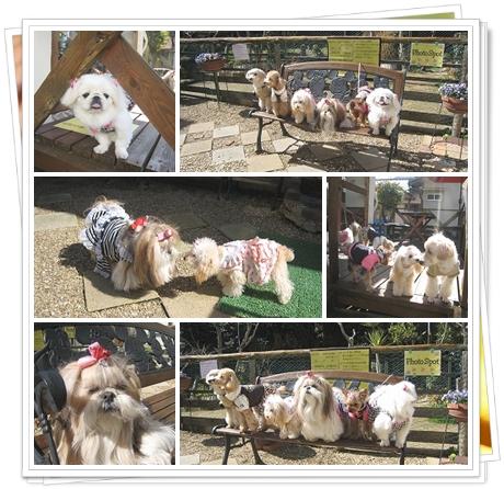 2cats_20110307121139.jpg