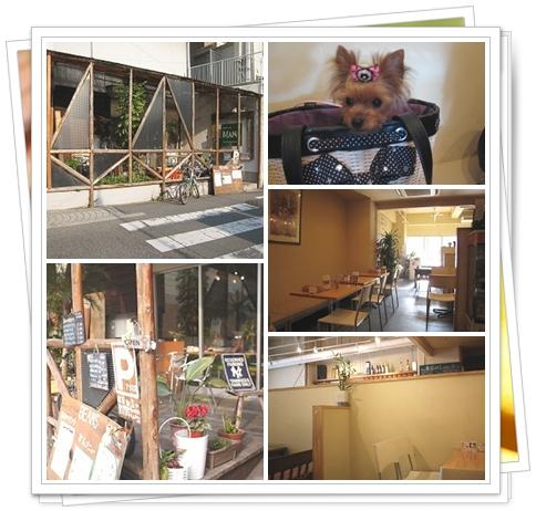 2cats_20110509083759.jpg