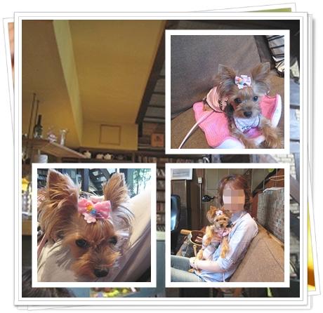 2cats_20110724225007.jpg