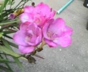 20070407185133.jpg