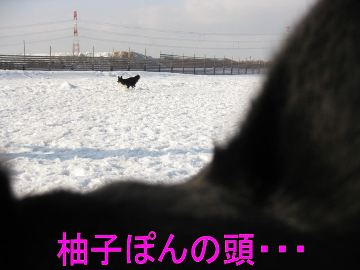 018_20100224103140.jpg