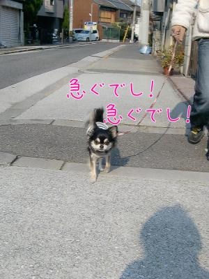 CIMG5439_convert_20111229202102.jpg