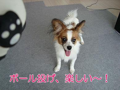 ボール投げ、楽しい~!