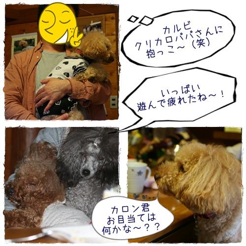 cats6_20091018232445.jpg