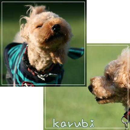 karubi_20090907220748.jpg