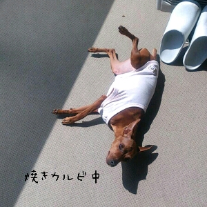 fc2blog_201204041332184af.jpg