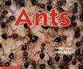 ants0001.jpg