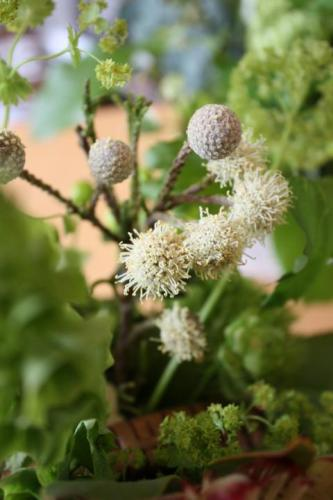 2010.5.12ブルニアの花