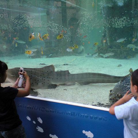 銀座ソニービル前の水槽に居た鮫 2009-07-30