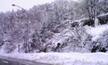 新潟・雪景色。。
