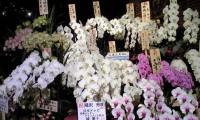 『滝沢革命』お花☆