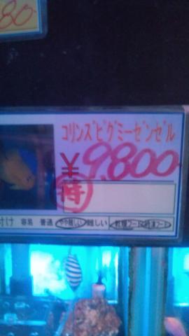 F1000344.jpg