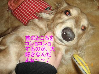 20050218203822.jpg