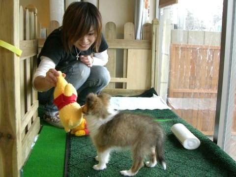 子犬と一緒