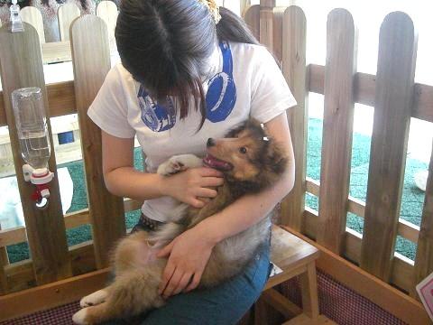 子犬とスタッフ
