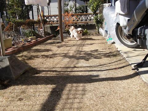 お庭の点検 1001230001
