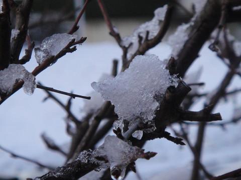 雪が・・ 1002020008