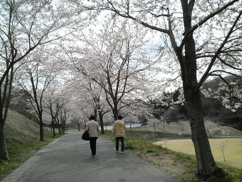 桜並木 1004190006