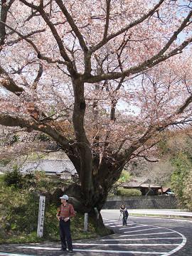 石割桜  2  1005020026