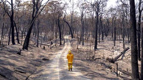 bushfire8