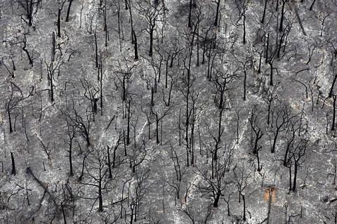bushfire12