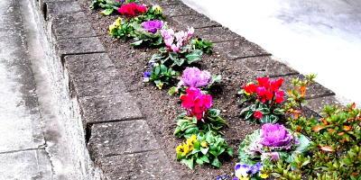 花壇の衣更1-400