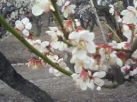 J0010018_20120326111946.jpg