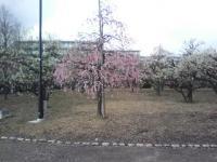 J0010019_20120326112035.jpg