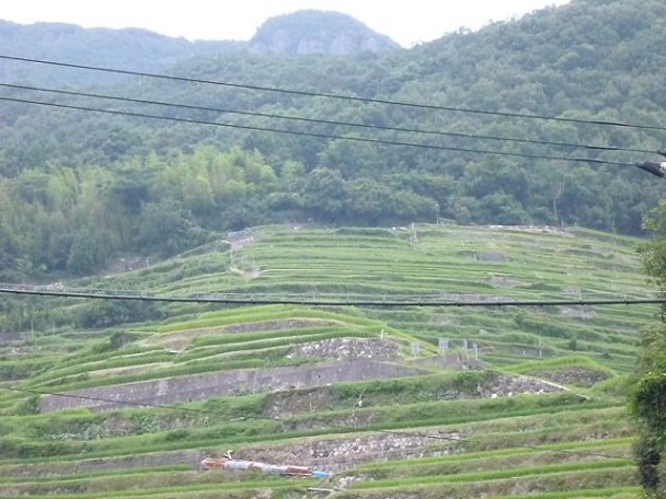 中山の千枚田です