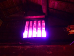 格子戸から漏れる外の光も色づいて見えます