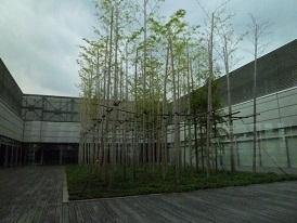 竹林は東京ミッドタウンの中にもあるんです