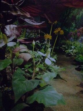 出口の庭 タンポポにドクダミにオオバコに
