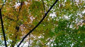紅葉の季節にはまだ早いんでしょうか