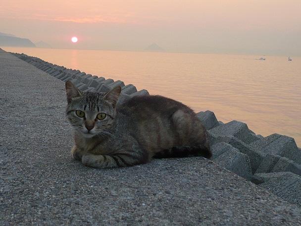 夕日ネコです