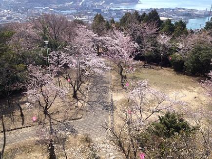 大空山桜40712S7